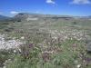 Champs d\'orchidées à Calern