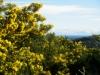 Randonnée mimosa à Auribeau su Siagne