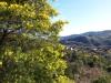 Vue du Peygros sur Auribeau sur Siagne 2015