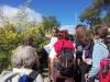rando; mimosa Auribeau sur Siagne 2015
