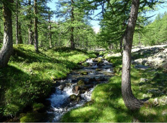 randonnée mercantour braissa forêt