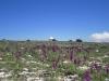 l\'observatoire de Calern et ses orchidées...