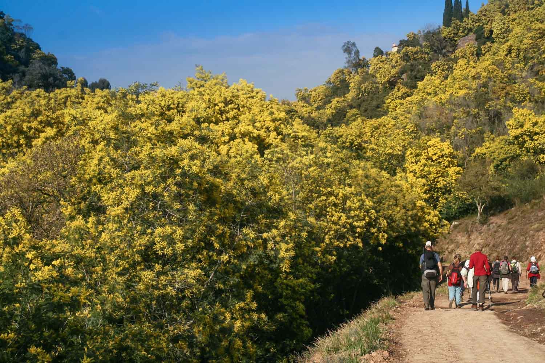 randonnée mimosa rando06 rando83