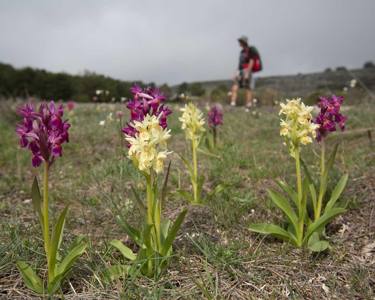 Randonnée flore calern avec rando06